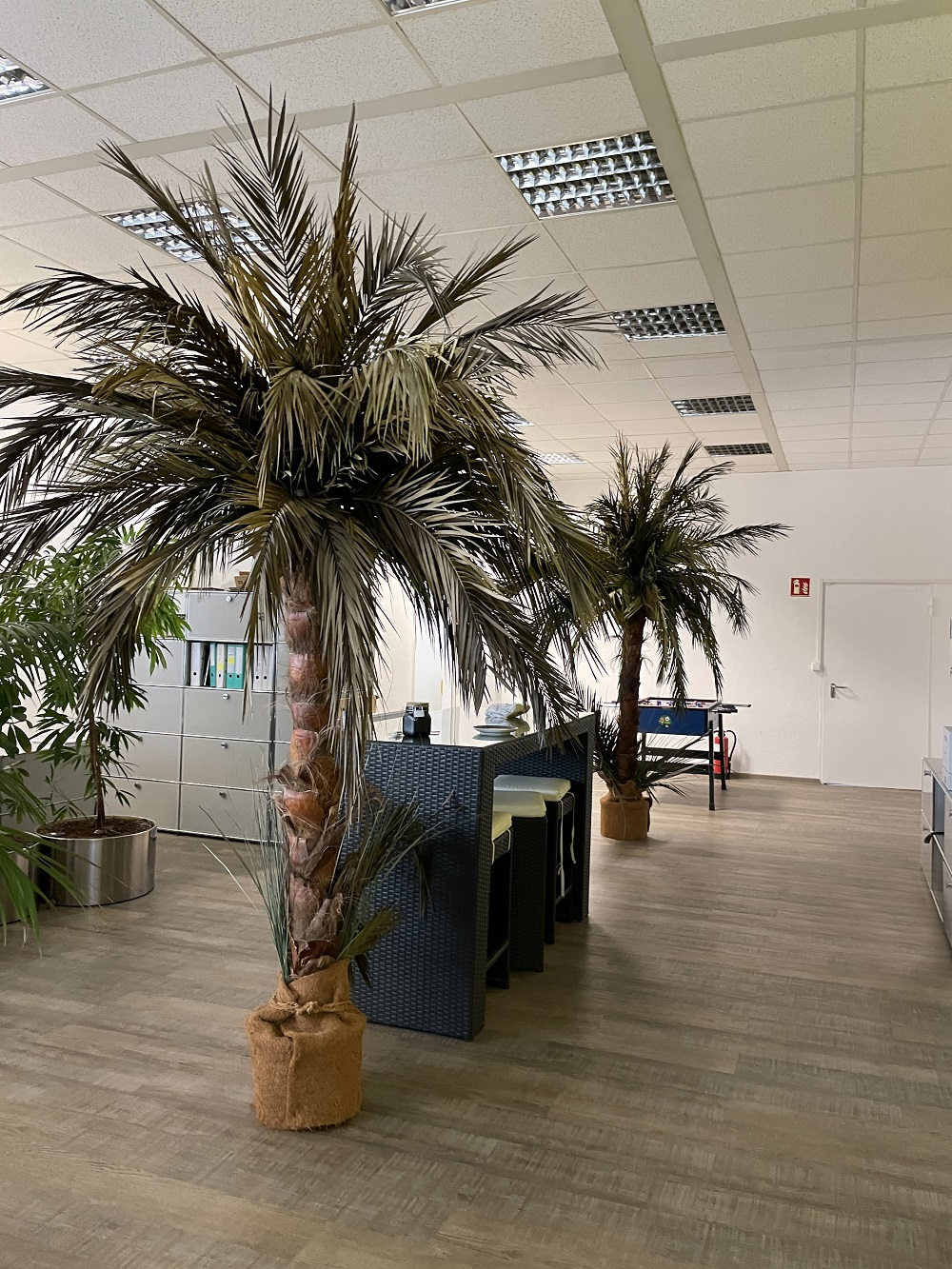 ACCENON Office unter Palmen